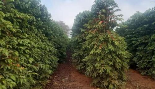 Excelente fazenda na região de Turvolândia MG
