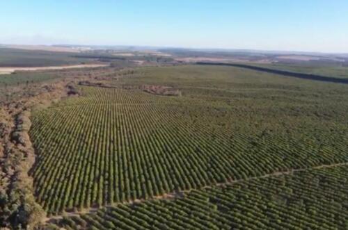 Fazenda Região de Marília SP (1)