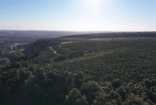Fazenda Região de Marília SP (17)
