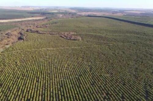Fazenda Região de Marília SP (2)