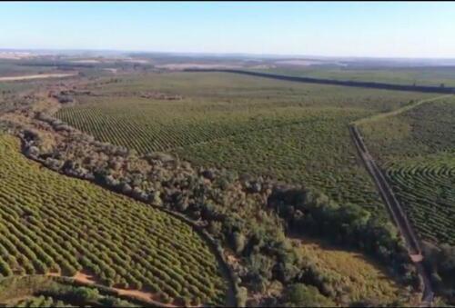 Fazenda Região de Marília SP (25)