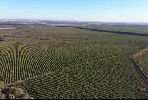 Fazenda Região de Marília SP (27)