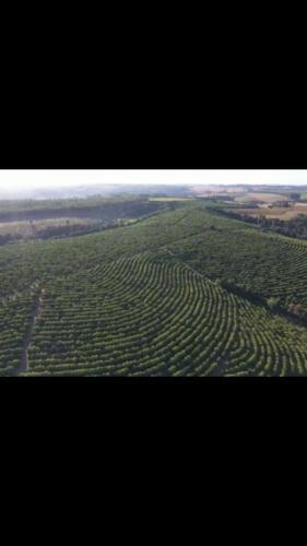 Fazenda Região de Marília SP (6)