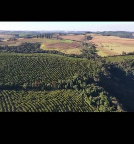 Fazenda Região de Marília SP (7)